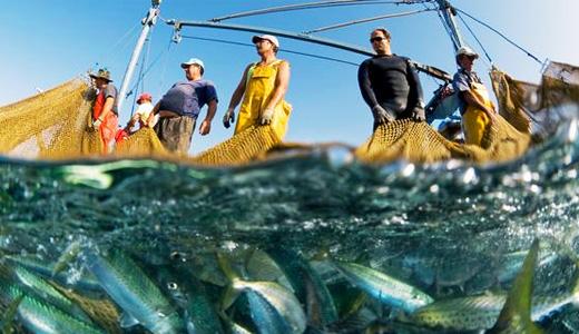 sobre-explotacion-pesquera